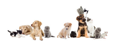 Group of pets. On a white background isolated Stock Photography