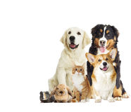 Group of pets on white background Royalty Free Stock Image