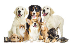 Group of pets on white background Stock Images