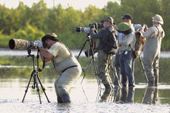 Group of photographers in water. CUBA , CAMAGUEY, REFUGO DE FAUNA RIO MAXIMO -MAY 27: Group of photographers with photoequipment in water, expecting a flamingo Royalty Free Stock Photo