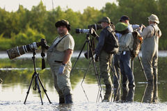 Group of photographers in water. CUBA , CAMAGUEY, REFUGO DE FAUNA RIO MAXIMO -MAY 27: Group of photographers with photoequipment in water, expecting a flamingo Royalty Free Stock Photos