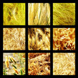 Group photographs of grass and plants. In the field Stock Photo