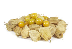Group of physalis Stock Image