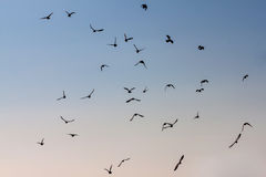 Group of pigeons. Stock Photos