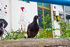 Crowd of pigeon on the walking street.Pigeons on the street. stock images