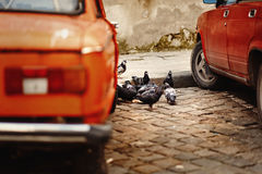 Group of pigeons eating on the road near red old car in european Royalty Free Stock Images