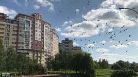 Group of pigeons flying in the city stock video footage