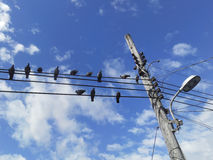A group of pigeons perched on a power lines against a blue sky. Birds on electric cables Stock Photography
