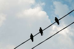 A group of pigeons on a power line. Royalty Free Stock Photography