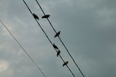 A group of pigeons on a power line. Royalty Free Stock Photos