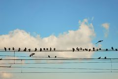 Group pigeons of sitting on wires Stock Photos