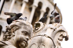 Group of pigeons on the statue Royalty Free Stock Photo
