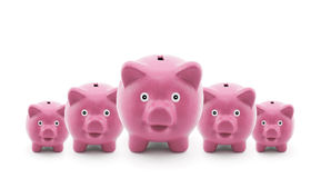 Group of piggy banks. Group of five pink piggy banks royalty free stock image