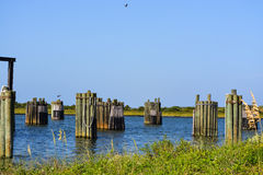 Group of pilings Stock Photography