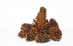 Group of pine cones Royalty Free Stock Images