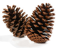 Group of pine cones Royalty Free Stock Image