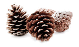 Group of pine cones  Stock Photos