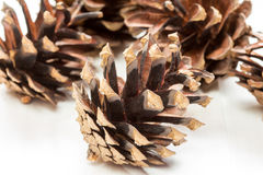 Group of  pine cones Stock Image