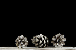 Group of pine tree cones Stock Images