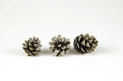Group of pine tree cones Royalty Free Stock Images