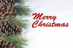 Group of pine trees and some branches with text in English `Merry Christmas` in white snow background.  Royalty Free Stock Images