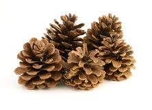 Group of Pinecones Stock Photos