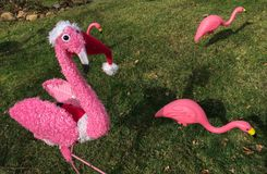 Pink flamingo Christmas lawn ornaments standing on green grass stock images
