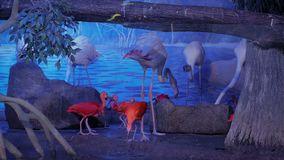 Group of pink flamingo in the zoo