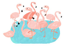 Group of pink flamingos. Hanging around Royalty Free Stock Photography