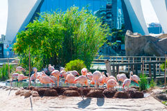 Group of pink flamingos Stock Photos