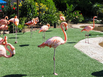 Group of pink flamingos in the park stock images