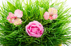 Group of pink flowers. On a green grass isolated on white background Stock Photography