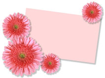 Group of pink flowers with message-card Stock Photo