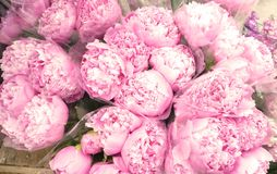 Group of Pink Peony Bouquets royalty free stock image