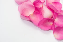 Group of pink rose petals as a frame on a white background Stock Photos