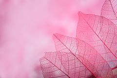 Skeleton leaves on blured background, close up. Group of pink skeleton leaves on blured background, close up royalty free stock images