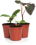 Group of Plant Seedlings Royalty Free Stock Images