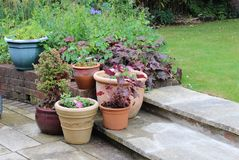 Group of planters on garden step with lawn in background stock images