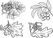 Group of plants Royalty Free Stock Photography
