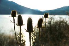 A group of plants on a sunset at a lake. stock images
