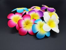 Group of plastic flower on black background royalty free stock images