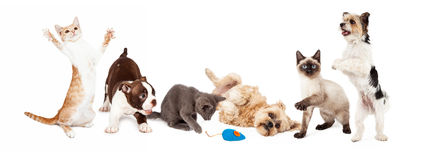 Group of Playful Cats and Dogs Royalty Free Stock Image