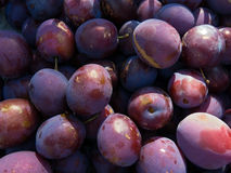 Group of plum fruits Royalty Free Stock Images