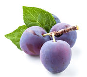 Group of plums with leaf isolated on a white. Royalty Free Stock Image