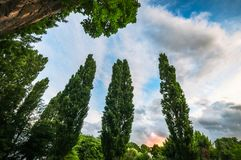Group of poplar trees at sunset. Low angle view of a group of poplar trees at suset in Wanaka. Wanaka is a popular ski and summer resort town in the Otago region Stock Photo