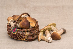 Group of porcini mushrooms on linen. Cep mushrooms in the basket. Royalty Free Stock Images