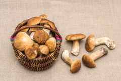 Group of porcini mushrooms on linen.  Mushroom in the basket. Stock Photo