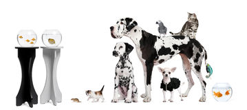Group portrait of animals. In front of black and white background Stock Photos