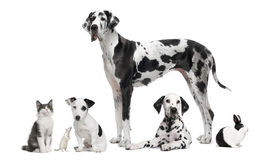 Group portrait of black and white animals. Pets - in front of white background Royalty Free Stock Photo