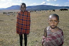 Group portrait of young Maasai herdsmen, Kenya. Closeup of Maasai boys with their goats and cows, near the village Kirtilikini in a mountainous and dry landscape Royalty Free Stock Image